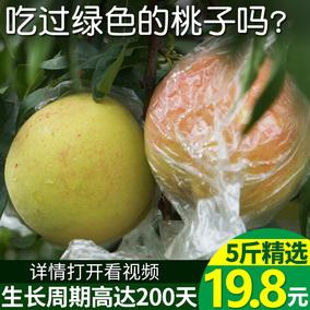 桃子水果 新鲜水蜜桃5斤当季 脆桃 大桃批发水果 丽江雪桃 黄桃
