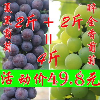 葡萄新鲜水果现摘夏黑巨峰青葡萄