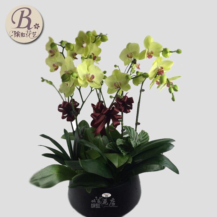 杭州蝴蝶兰盆栽礼品绿植鲜花同城花店开业送领导客户客厅开花花卉