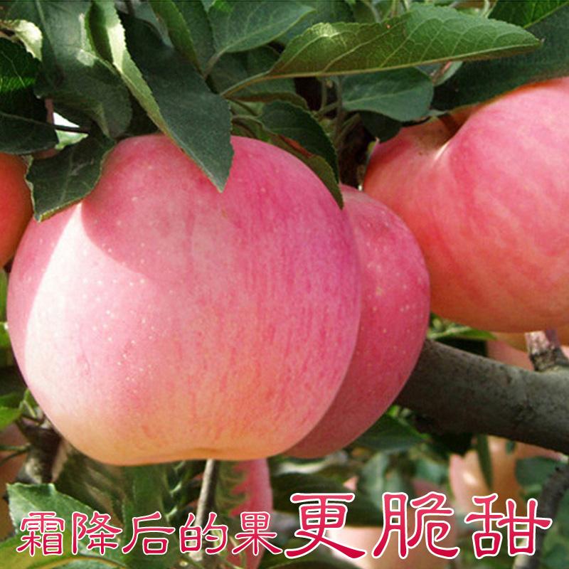 甜溜溜烟台苹果水果新鲜山东栖霞红富士有机批发10斤包邮