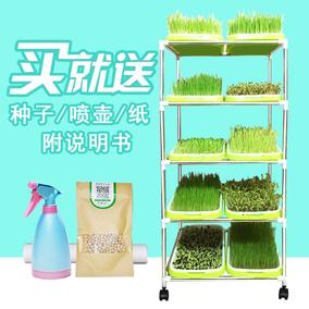 芽苗菜育苗盘架子不锈钢塑料小麦草种植架双层豆芽菜纸上种菜包邮