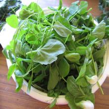 豌豆荚 包邮 豌豆苗 煮汤烫火锅 4斤 农家现摘新鲜蔬菜豌豆尖500g