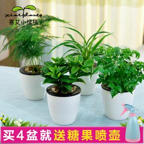 绿萝发财树吊兰多肉绿植小盆栽花卉办公桌室内水培吸甲醛植物盆景