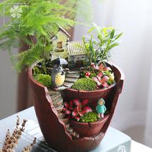 微景观植物创意盆栽生态瓶迷你盆栽苔藓植物办公桌摆件diy盆栽