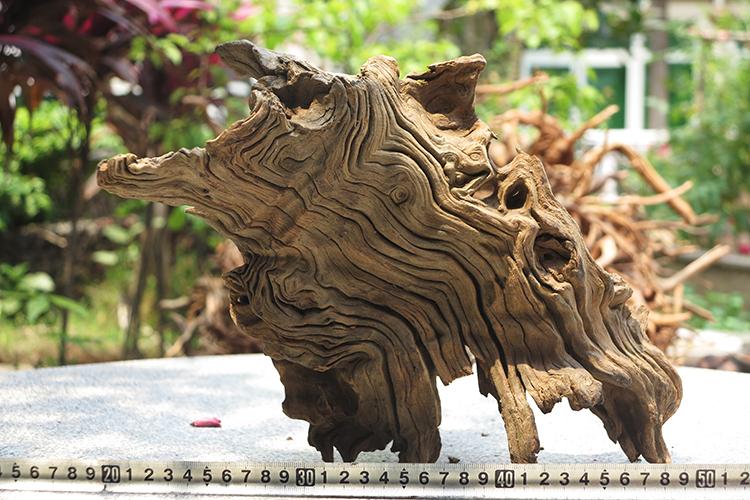 千年枯木树盒子雨林华丽膝头蟑螂成体亚克力守宫饲养蜥蜴爬虫爬宠