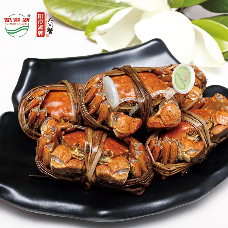大闸蟹多少钱?最新大闸蟹价格优选