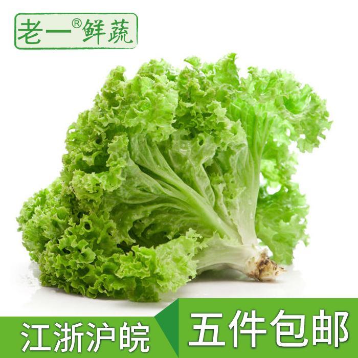 老一鲜蔬 新鲜花叶生菜绿萝莎绿叶散叶生菜沙拉蔬菜 500g图片