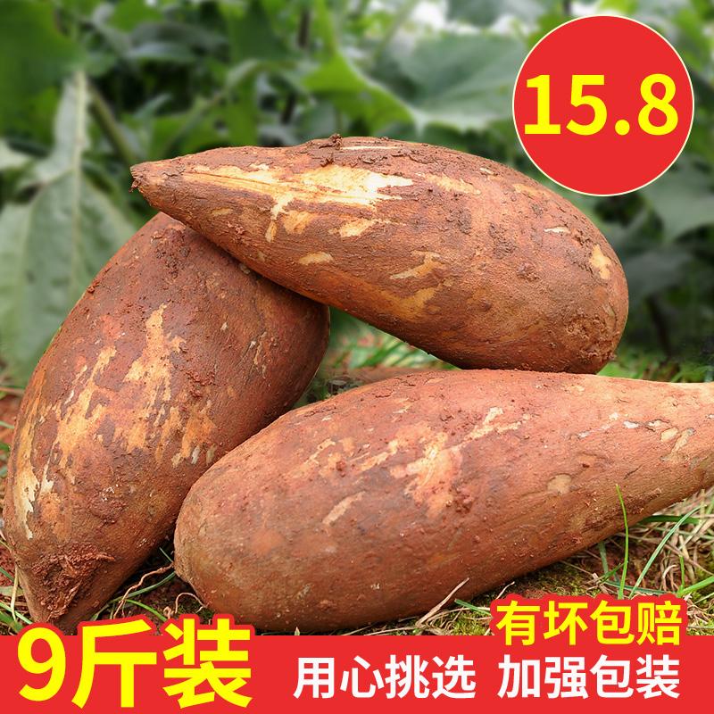 9斤装天山雪莲果新鲜水果批发包邮时令当季现挖云南特产生鲜现货
