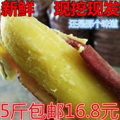 【天天特价】陕西临潼板栗薯新鲜红薯现挖小香薯地瓜番薯山芋5斤