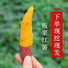 沙地黄心板栗红薯山芋地瓜番薯 7月现挖新鲜红薯迷你小香薯5斤装