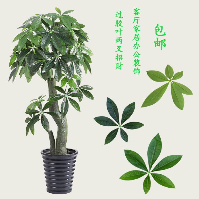树盆景发财树绿植