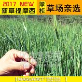 5斤包邮2017提摩西草兔草兔子干草提草荷兰猪饲料豚鼠草粮250g