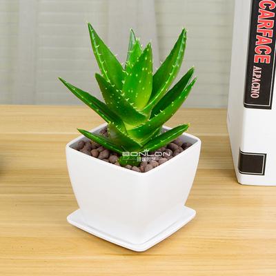 不夜城芦荟绿植盆栽办公桌室内桌面植物吸甲醛防辐射