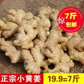 土姜 生姜新鲜四川特产农产品月子姜7斤 四川正宗 包邮 老姜 小黄姜