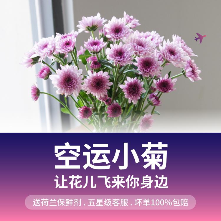 【花年】多色小雏菊鲜花速递空运到家
