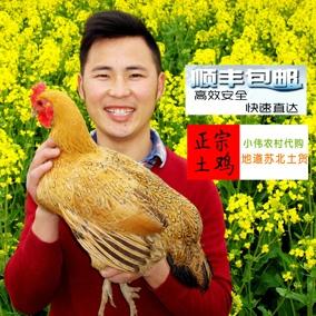 正宗土鸡农家散养2年老母鸡苏北草鸡自养活鸡现杀 笨鸡乌鸡月子鸡