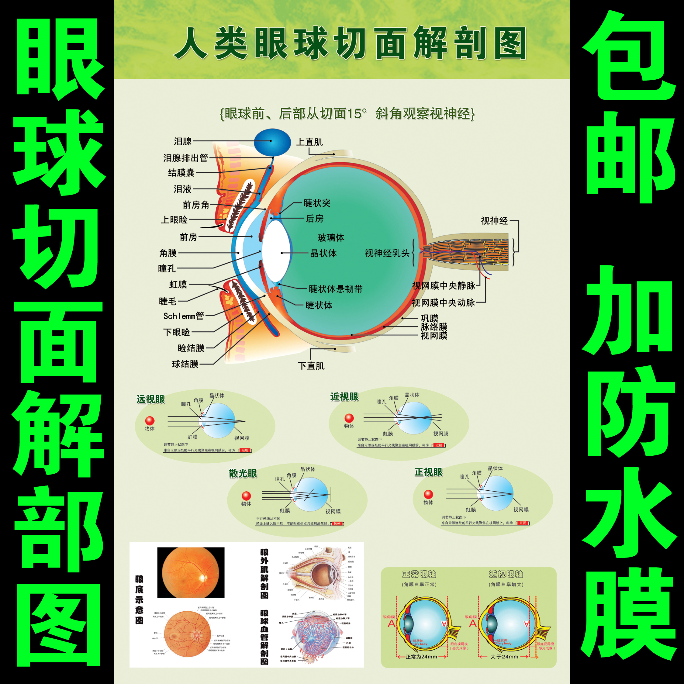 眼球解剖图泪腺分布图 人体眼部肌肉血管结构图 医院医学宣传海报