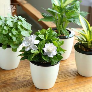 花卉 盆栽花卉图片及名称 盆栽花卉图片及名称